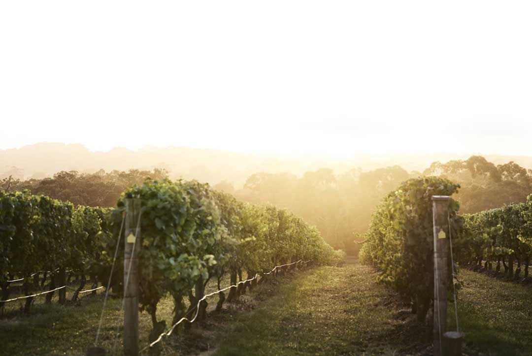 Best Winery Bus Tours from Melbourne