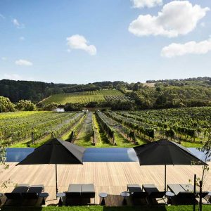 Yarra Valley Wine Tasting Bus Tours